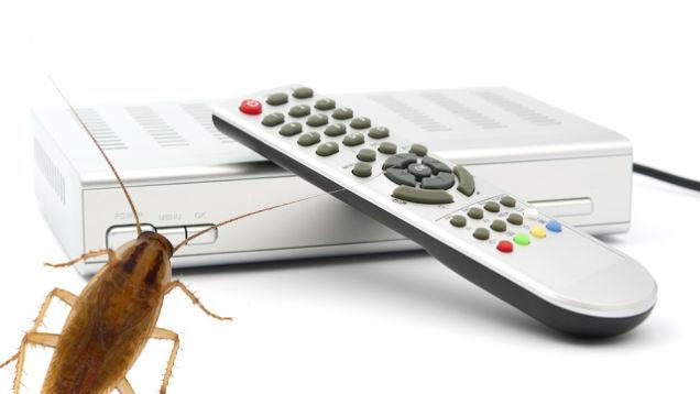 Как вывести тараканов в частном доме