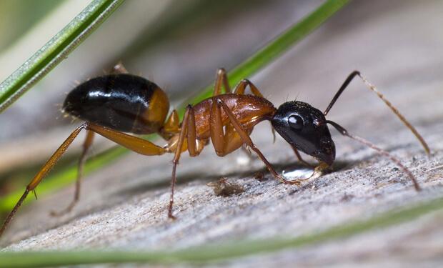 Чем вывести муравьев с дачного участка