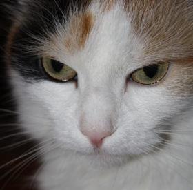 Как полностью вымыть запах кошачьей мочи с ковра