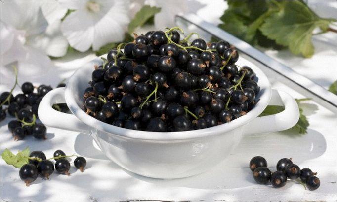 Чем вывести пятна от черной смородины