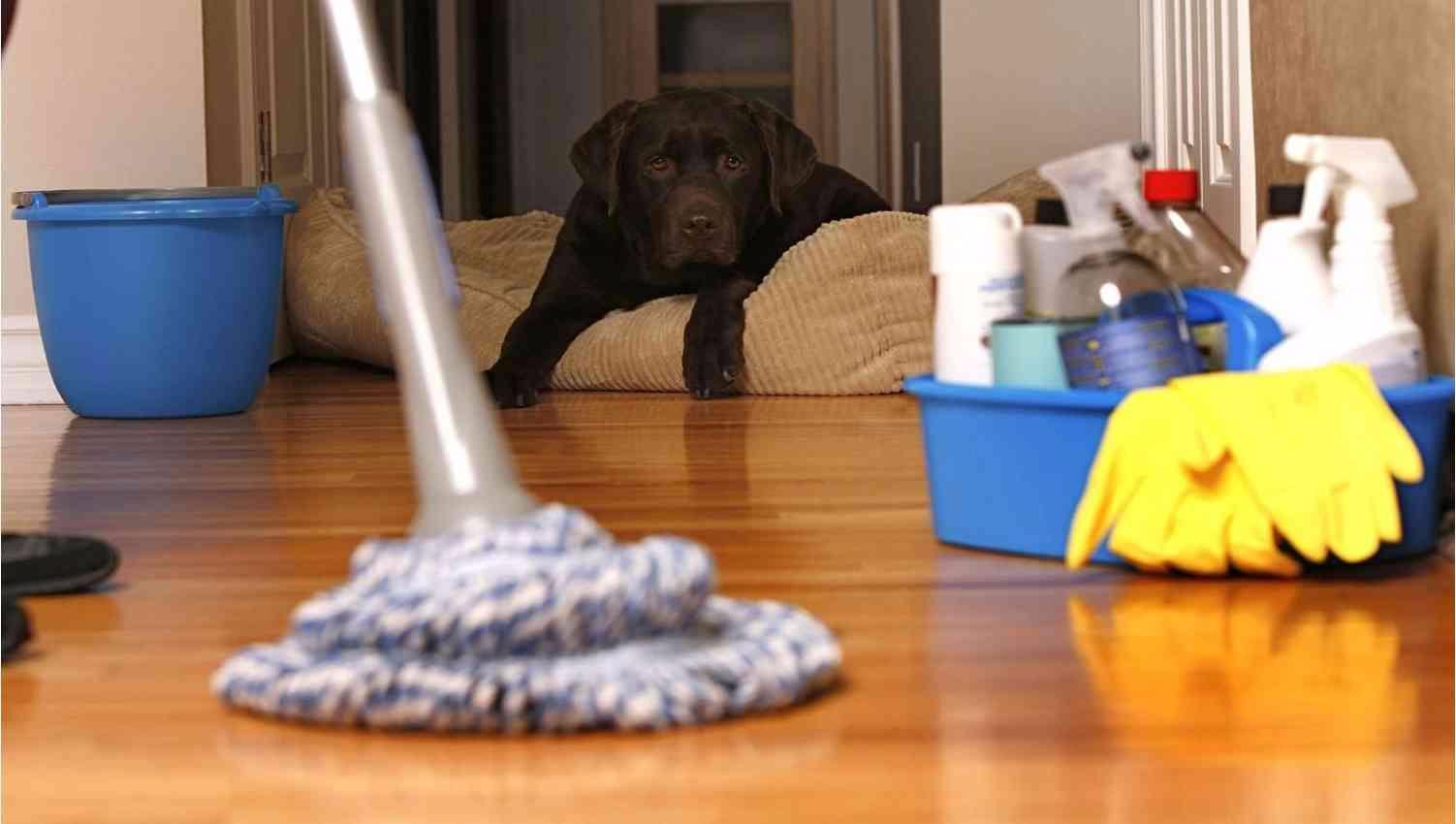 Как вымыть пол