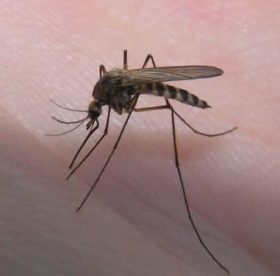 Избавляемся от комаров в квартире: полезные советы