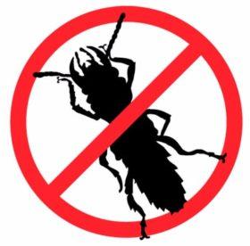 Избавьтесь от тараканов! Советы, рекомендации